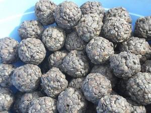 Le soumbala, soit les graines de néré fermenté, avant d'être pilé.