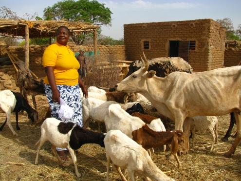 Madame Kafando, une productrice pionnière de la Boucle du Mouhoun, et une partie de son troupeau